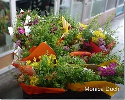 monica duch-3