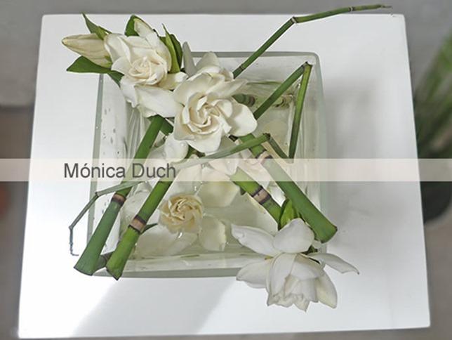 monica duch-Gardenia 2