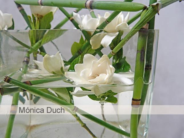 monica duch-Gardenia 3